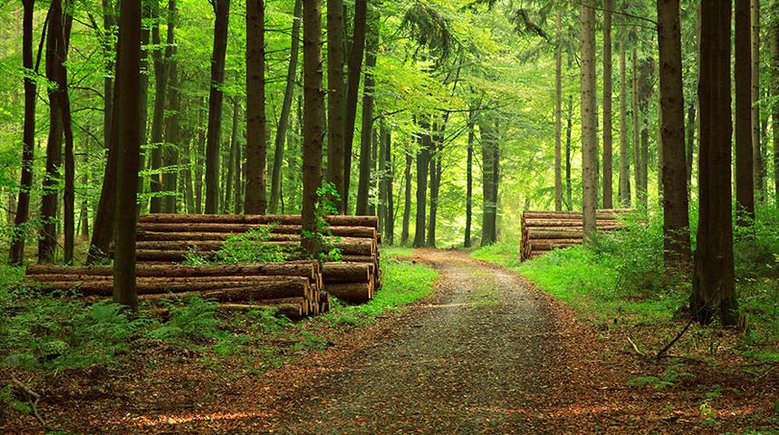 forest ile ilgili görsel sonucu